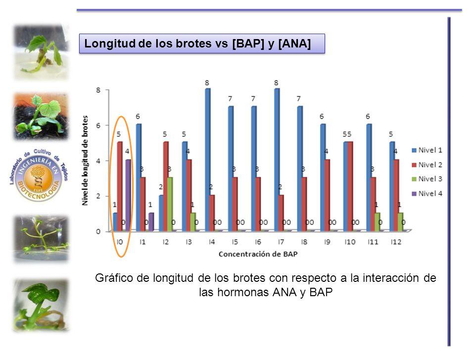 Longitud de los brotes vs [BAP] y [ANA]